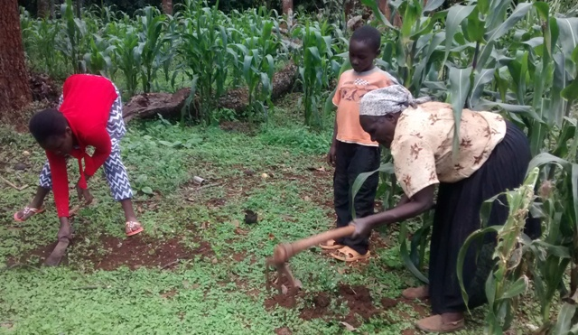 wanja-migwi-and-her-grandchildren-doing-some-weeding-in-the-garden