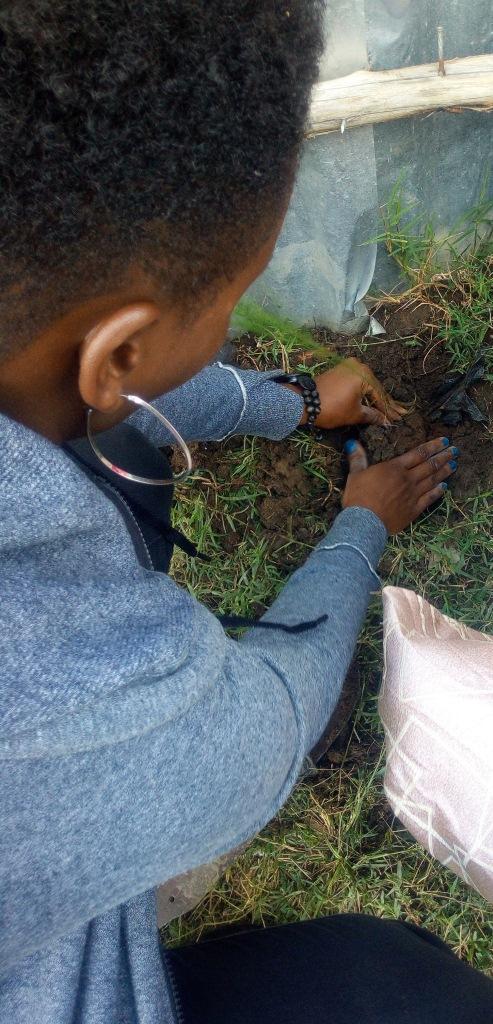 Shiro planting a tree